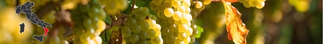 Vini Bianchi Calabresi