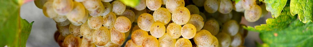 Vini Biancolella