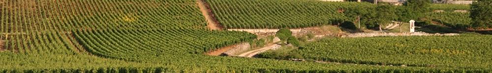 Borgogna Vini