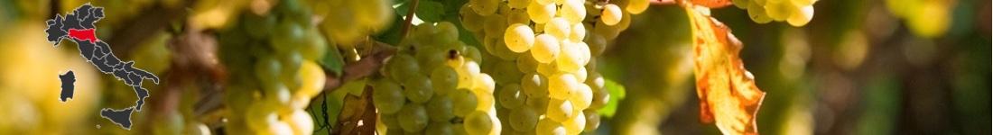 Vini Bianchi Emilia Romagna