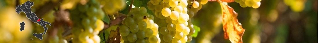 Vini Bianchi Molise
