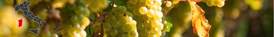 Vini Bianchi Sardi